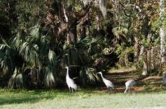 FLORIDA WILDLIFE ABOUNDS AT MOUNT ROYAL